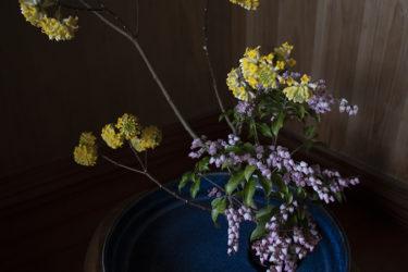 春だなぁ〜裏山の花を生ける休日