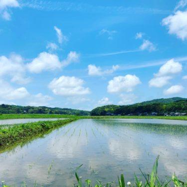 田園風景にうっとり #私の好きな場所
