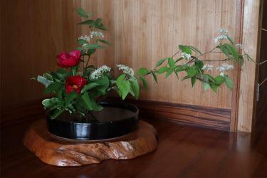 初夏だなぁ〜裏山の花を生ける休日