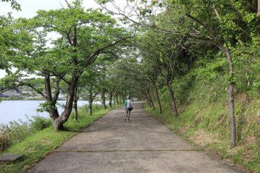 離湖散歩 ~シンメトリーは美しい(今日もデザイン・エンカウント#4)